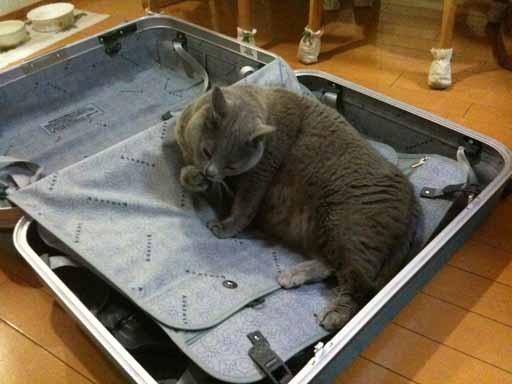 スーツケース7-512.jpg