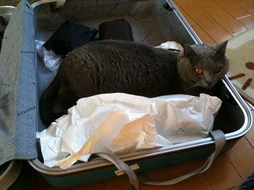 スーツケース2-512.jpg